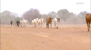 Reportage ARTE: Famine au Burkina Faso