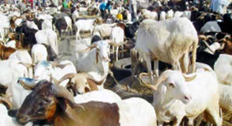 Fête de Tabaski 2012: Le mouton se négocie entre 30 000f et 350 000f à Ouagadougou