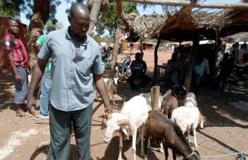 Tabaski 2012: Des préparatifs timides à Dédougou