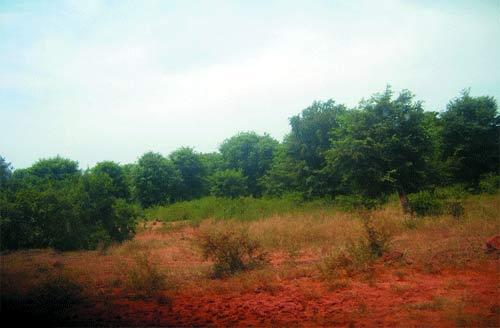 Sabcé au Burkina: Des hectares de forêts sacrifiées sur l'autel du métal précieux