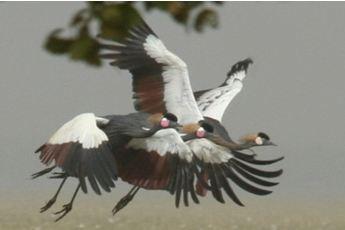 Message de NATURAMA à l'occasion de la journée mondiale des oiseaux migrateurs