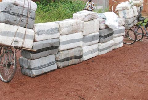 Brigade mobile des Douanes: 1 260 kg de chanvre indien saisis à Bobo-Dioulasso