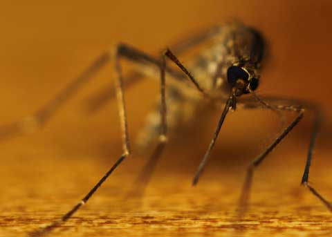Le moustique: portrait d'un tueur en série