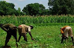 Etat de la pluviométrie dans les pays du CILSS:  Des perspectives de bonnes récoltes s'annoncent
