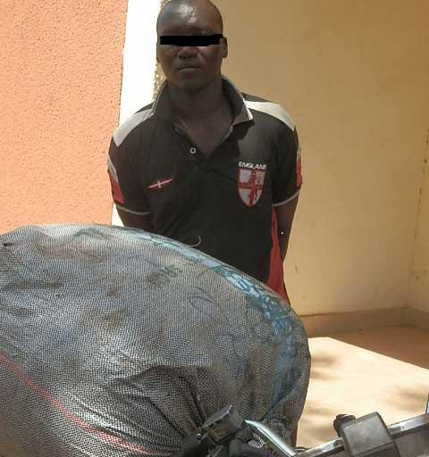 Koupèla: 35,5 kg de chanvre indien saisis par la police