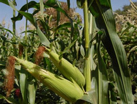 Campagne agricole de saison sèche 2013-2014: Relever le défi faim zéro et réduire la pauvreté rurale