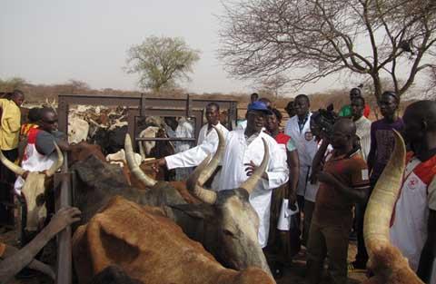 Santé animale: Le CICR et ses partenaires au chevet des éleveurs de l'Oudalan