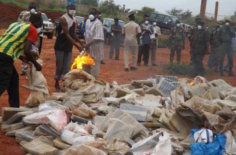 Direction régionale de la Douane de l'Ouest: 25 tonnes de  drogues ont été brulées