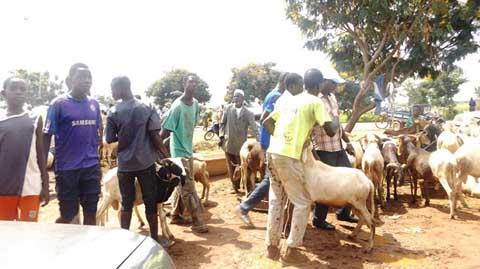 Tabaski 2014: du vrai business pour les vendeurs de bétail