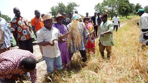 Projet riz fluvial: Le bas-fond rizicole de Bana (Dédougou) attend 80 tonnes sur une superficie de 20 hectares