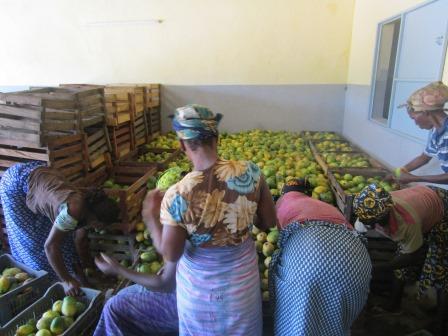 Sécurité alimentaire dans les Cascades: Oxfam évalue les résultats de ses financements