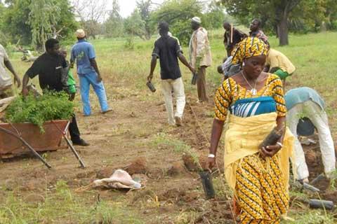 Orpaillage à Gombélédougou: Réduire les pertes végétales par le reboisement