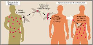 Lutte contre le paludisme au Burkina Faso: La Banque mondiale contribue pour 37 millions de dollars