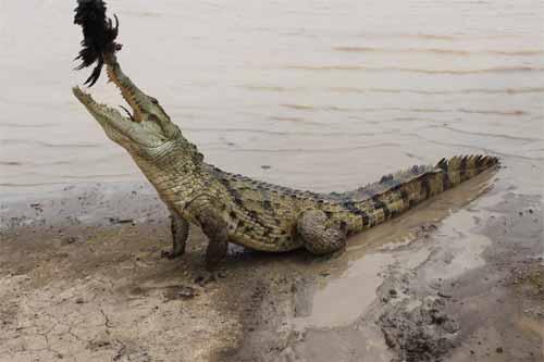 Tourisme au Faso: La mare aux crocodiles sacrés de Sabou