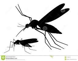 Lutte contre le paludisme: Plus de trois millions de cas enregistrés