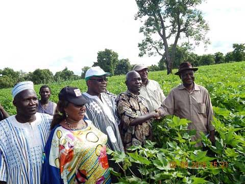Campagne cotonnière dans la Boucle du Mouhoun: Le gouverneur encourage les producteurs