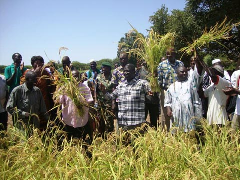 Suivi de la campagne agricole au Nord: Des producteurs modèles dans les bas-fonds rizicoles de Nongodoum et Koumbri
