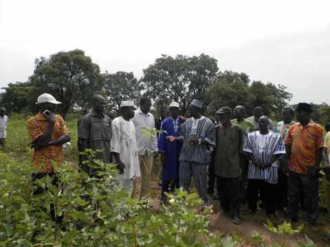 Culture cotonnière: l'UNPCB en tournée dans le Tuy et dans la Comoé