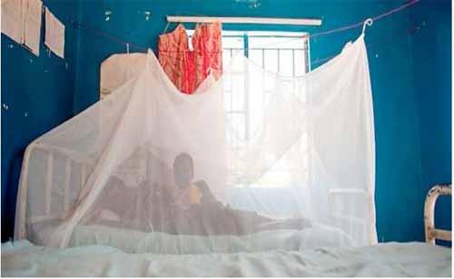 Malamine Ouédraogo, fils d'Alizet Gando, accusé d'avoir détourné l'argent des moustiquaires