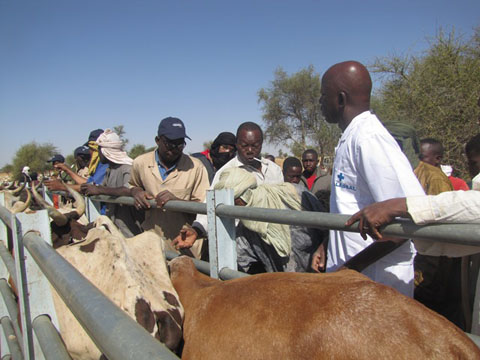 Santé animale: La Croix rouge soutient la vaccination et le déparasitage gratuits de 290 000 ruminants