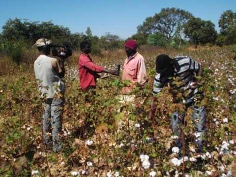 Parlons du 100% coton conventionnel au Burkina
