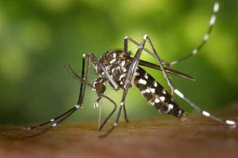 Déjà la saison des pluies: Attention aux comportements favorisant le paludisme!
