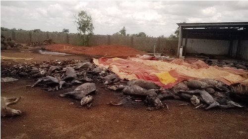 Abattoir d'ânes de Balolé: Les promoteurs ne sont pas de Taïwan selon l'Ambassade