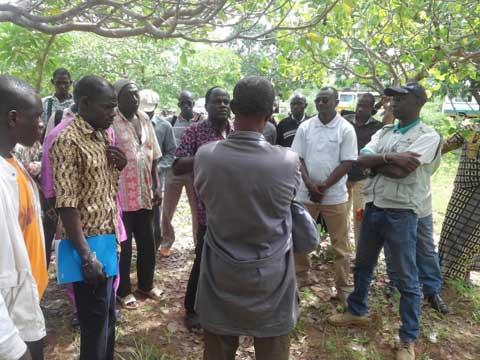 Filière anacarde: L'INERA a formé des acteurs à Bobo