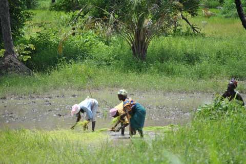 Biotechnologies agricoles: Le sens de l'engagement  de la société civile au Burkina Faso