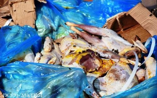 Gare de l'Est de Ouagadougou: Environ trente tonnes de poulets avariés saisies