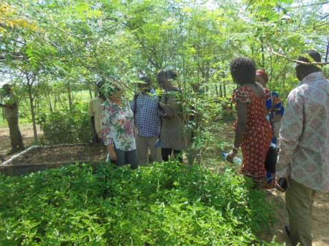 Ferme agricole de l'Association Yelemani: Visite guidée avec des étudiants en politique et pratique du développement