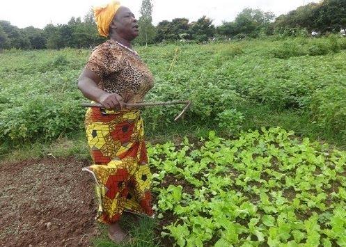 Aminata Kaboré: Profession, jardinière!