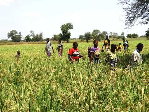Lutte contre la pauvreté: La Banque mondiale et ses partenaires visitent des producteurs du Plateau Central