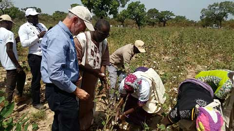 Le projet RECOLTE pour la production de semence de coton biologique  de qualité
