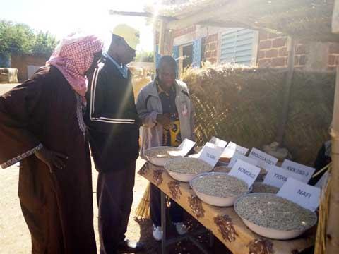Journées promotionnelles de Niébé au Nayala: Valoriser une filière indispensable à l'atteinte de la sécurité alimentaire