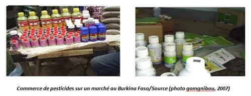 Usage incontrôlé des pesticides et impact sur l'environnement et la santé des populations