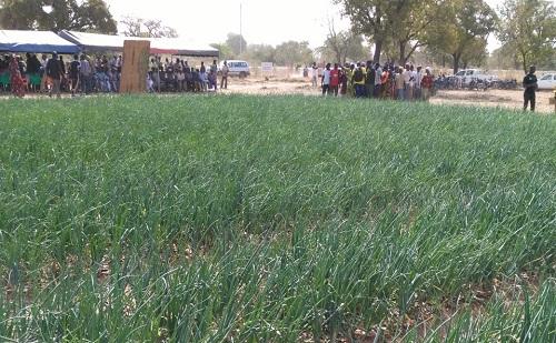 Commune de Dédougou: Démonstration des résultats de l'irrigation goutte à goutte