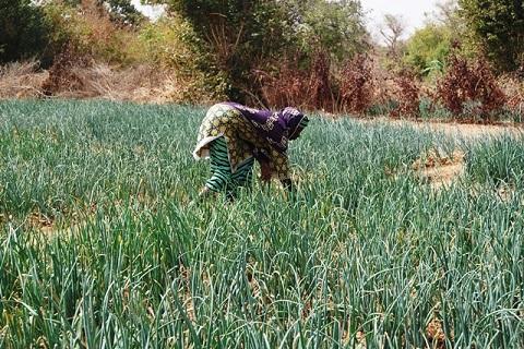 Epargne communautaire: L'approche «VLS», une manne pour les femmes de Kougri