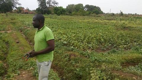 Culture de contre-saison à Fada N'Gourma: A la découverte du Groupement Yentema et son jardin, vieux de 36 ans