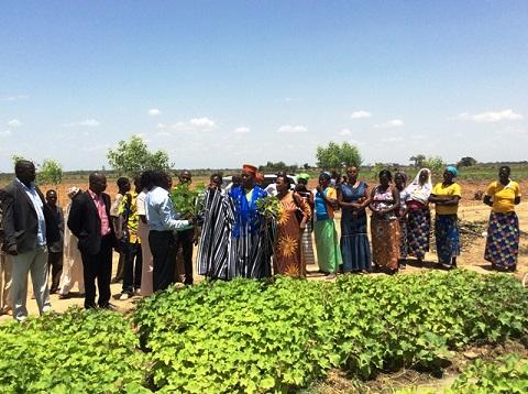 Agriculture: Le ministère de l'énergie officialise son partenariat avec Belwet plantation