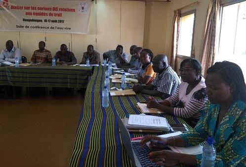 Protection des équidés de trait au Burkina: l'ONG Brooke en fait son cheval de bataille