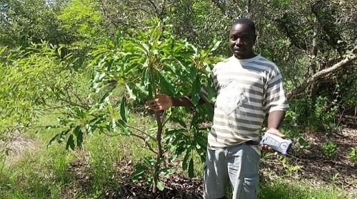 ''Il y a autres manières de reboiser sans planter'', Koenou Meme dit Pascal du CFAD de Daboura