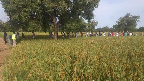 Campagne agricole 2017 – 2018: Le ministre Jacob Ouédraogo dans le grenier du Burkina