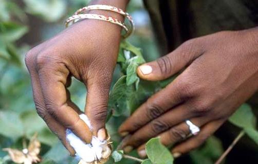 Information du public sur les OGM: Des acteurs ont examiné le projet de texte