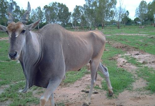 Burkina Faso: Il faut sauver le parc animalier de Ziniaré