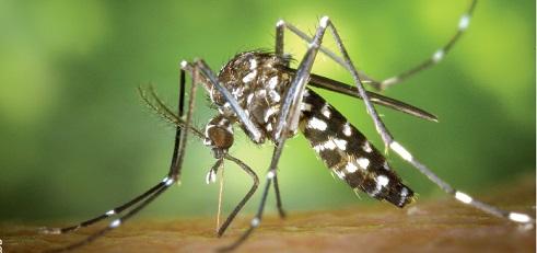 La dengue: Que faut-il en retenir?