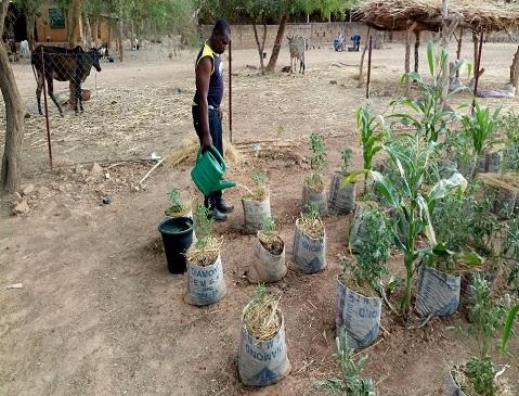 Agriculture: La culture hors-sol, un espoir pour nourrir les Burkinabè!