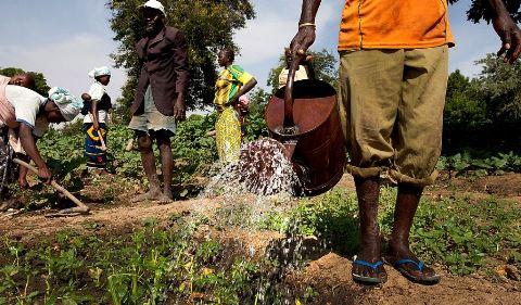 Capitalisation de la nouvelle Banque Agricole du Faso: Comme un champ de la mal gouvernance