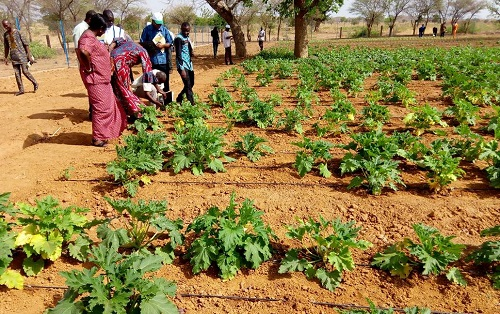 Irrigation goutte à goutte: Une réponse pour les pays sahéliens comme le Burkina