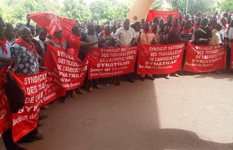 Syndicat national des travailleurs de l'agriculture: 48 heures de grève pour exiger la satisfaction de la plateforme revendicative